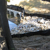 Sediment scooped out of in-stream settling pool at outfall and dumped uphill outside silt fence.  Southwest quadrant of I-495/Rt 236 Rd interchange. 13 Oct 2010